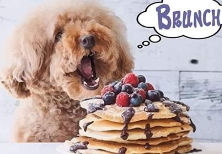 Brunch with Your Pup! - Sunday, March 15, 2020