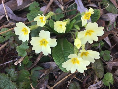 Suddenly Spring