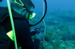 Plongée scientifique à Madagascar