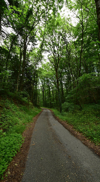 forested hiking trail near Hamilton, ON