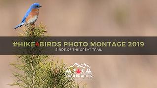 Bird Montage 2019.jpg