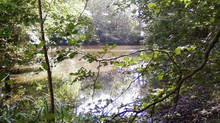 Division et bornage autour d'un étang vers Aubigny les Pothées