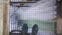 Travaux d'implantation de barrages dans la Meuse