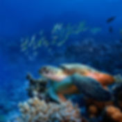 Diving Expeditions, Diving Tours