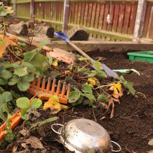 Gardening!