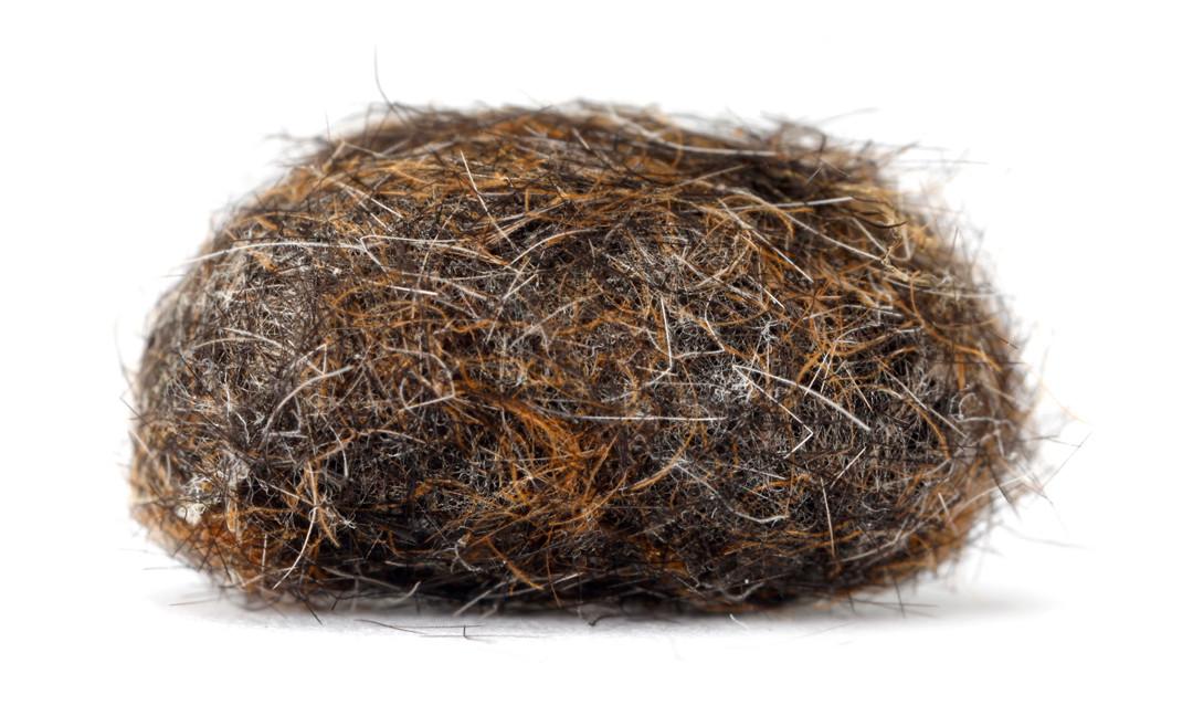 Euchaetes egle  •  Milkweed Tussock