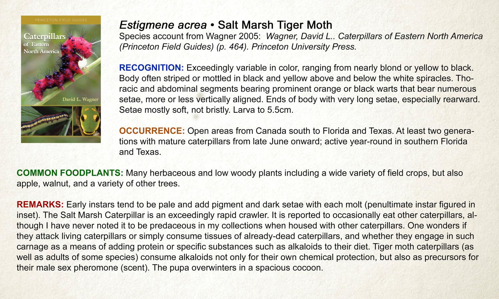 The Caterpillar Lab Spilosomina Tiger Moths