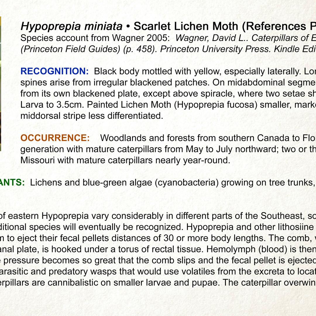 Hypoprepia fucosa  •  Painted Lichen Moth