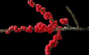 christmas-1759081_1280.png