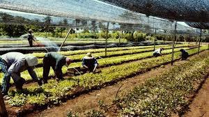 Rurales acordaron escala salarial 2020.  Nuevos básicos de febrero a junio 2020.  Incluye $4000 fijo