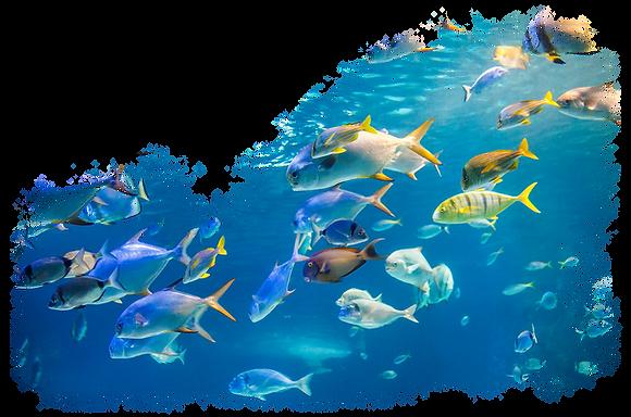 Fish-ID.png