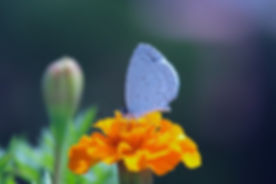 Butterfly on a Flower_edited.jpg