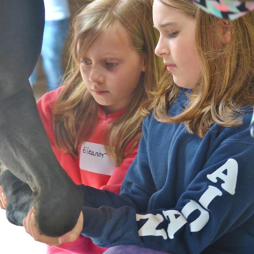 Horse Grooming & Health Unmounted Workshop