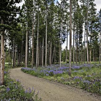 Pines At Meadow Ridge