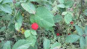 [2021年5月号] 野の花