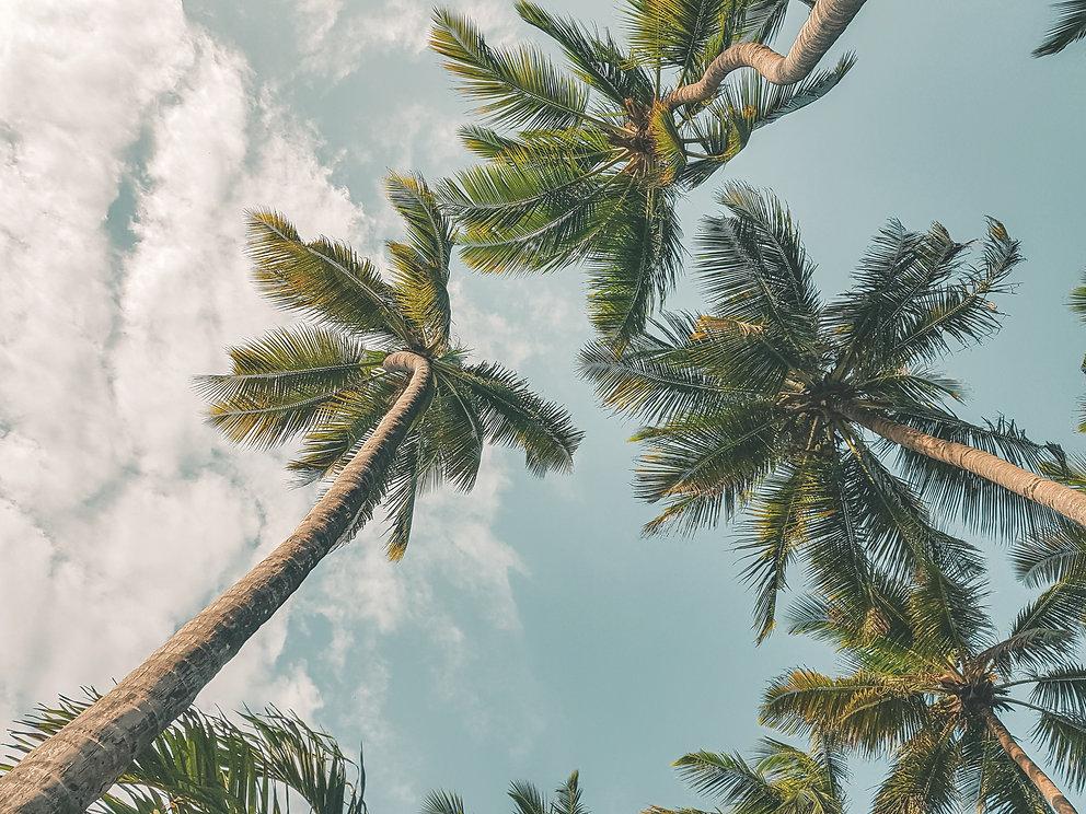 palm%20trees%20kenya_edited.jpg