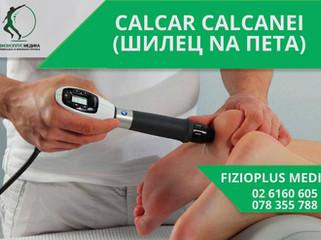 CALCAR CALCANEI