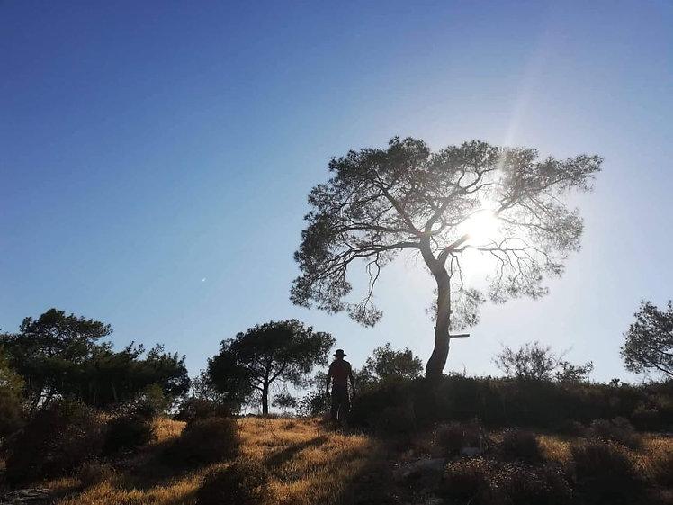 Chirokitia eco village tree
