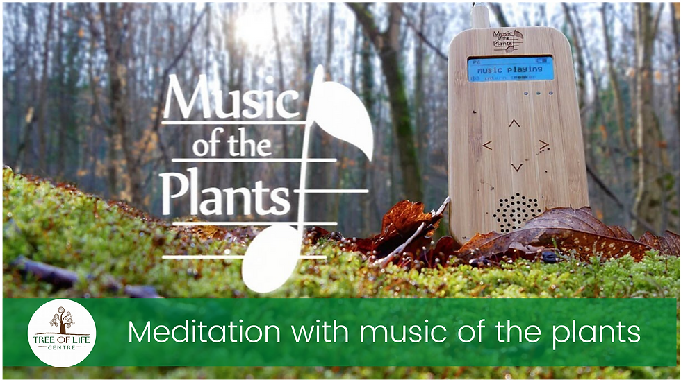 Meditation with Plant Music