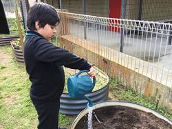 dkhan watering (3)crop