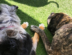 Just two friends holding hands in the yard..