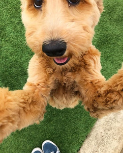Puppy hugs are the best hugs 🤗