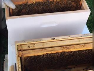 Honey Bee Tales #6