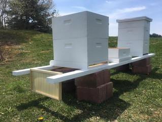 Honey Bee Tales #5