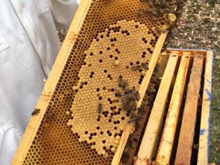 Honey Bee Tales #4