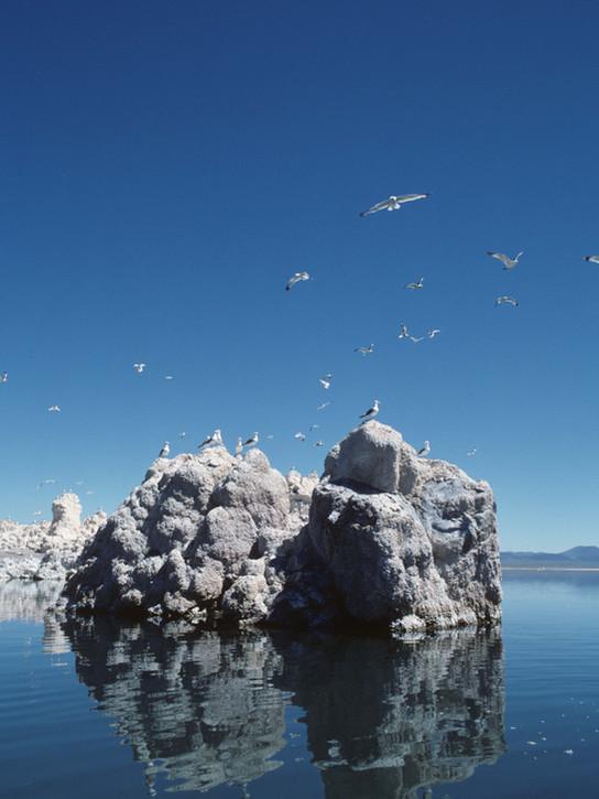 California_Gulls_Mono_Lake_040.jpg