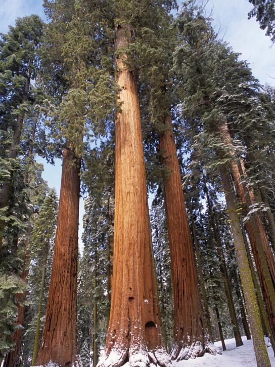 Sequoia_National_Park_012.jpg
