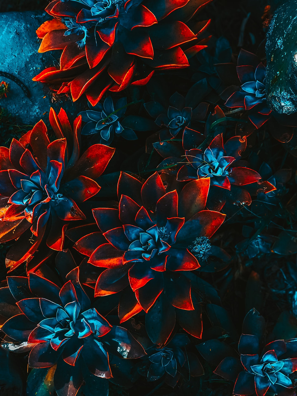 dark blue and red flowers