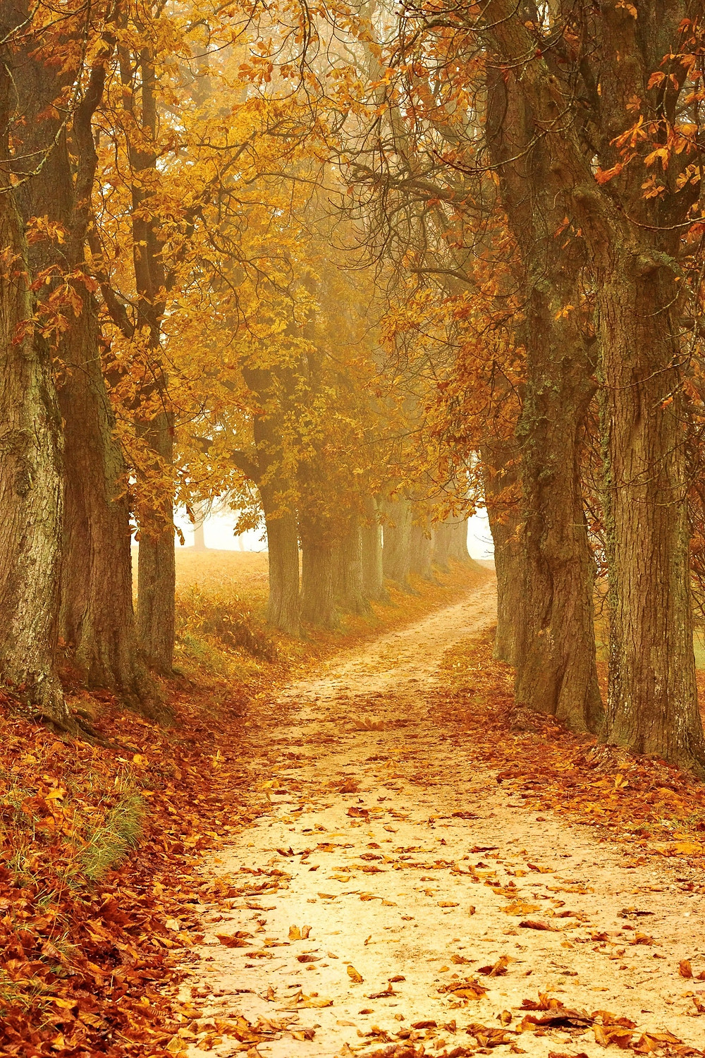 Autumn trees with leaves falling and a fork in the road