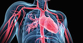 Circulatory Syste