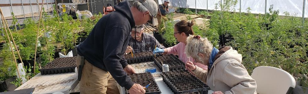 Planting Hemp Seeds with Friends