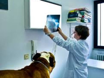 X-rays for a Rescue Dog