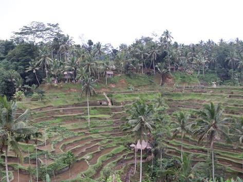 Beginners in Bali