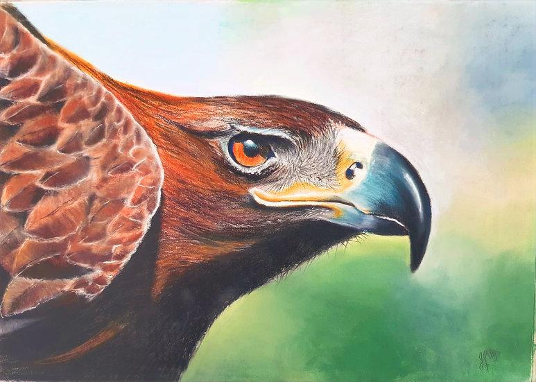 Wedgetail Eagle - Original Pastel - John Peter Uys