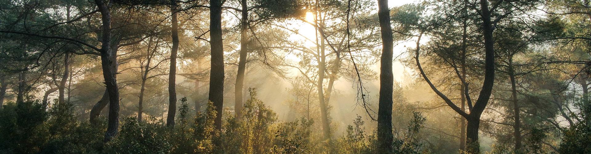 Det er gull i grønne skoger