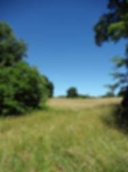 my photos 3626.jpg