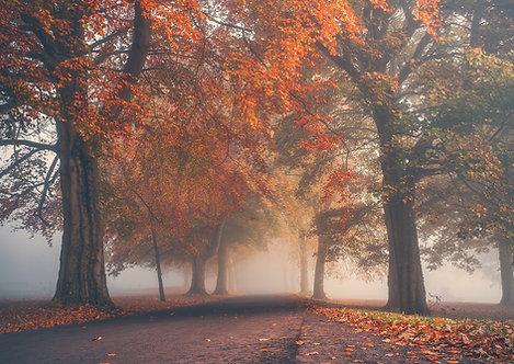 Foggy Camperdown