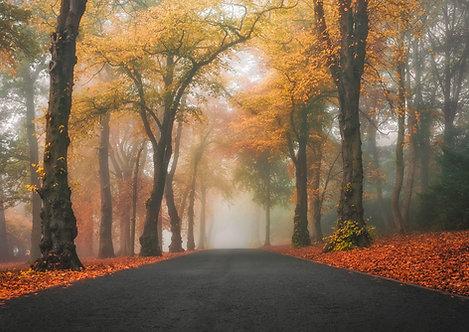 Foggy Camperdown Drive