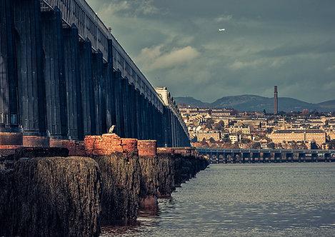 Tay Rail Bridge Heron