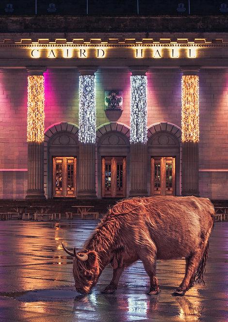 Caird Hall Highland Cow