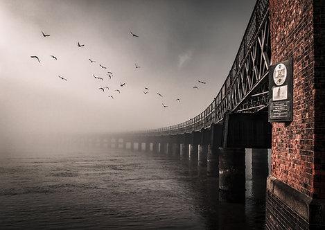 Tay Bridge Pigeons