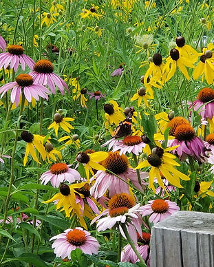 Pollinator Love