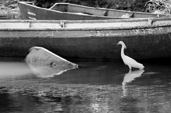 Boat with bird BW