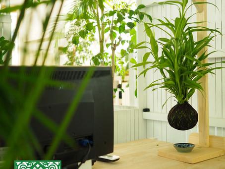 ORNAMENTAL PLANTS FOR INTERIOR SPACES