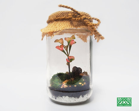 Flower Bud-dy in Terrarium