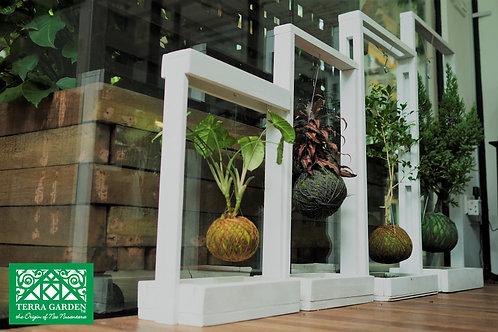 Box Grass Kokedama Frame